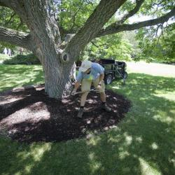 Grounds crew staff member spreading mulch at The Morton Arboretum