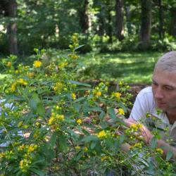 Joseph Rothleutner performing controlled crosses on St. John's Wort (Hypericum) plants
