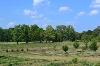 Tree Research Plot at The Morton Arboretum