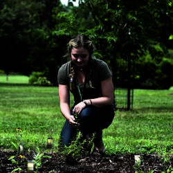 Herbarium intern studying plants in the research garden at The Morton Arboretum