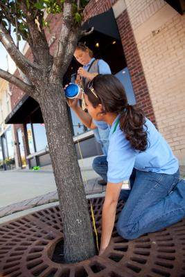 Staff from The Morton Arboretum measuring street trees for the tree census