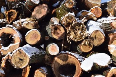 Cut logs in the winter