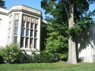 ACCOLADE® elm (Ulmus davidiana var. japonica 'Morton') near the Thornhill Education Center at The Morton Arboretum