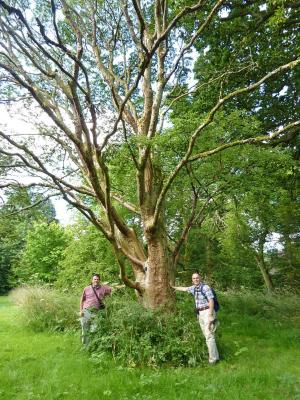 Kris Bachtell standing near a paper-barked maple (Acer griseum) in Wales