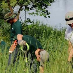 Woodland stewardship volunteers on a workday on the grounds of The Morton Arboretum