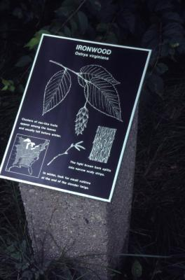 Ostrya virginiana (ironwood) interpretation sign