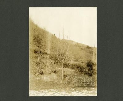 Magnolia officinalis Rehd. & Wils.