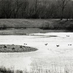 Geese sitting on snow covered Arbor Lake in winter