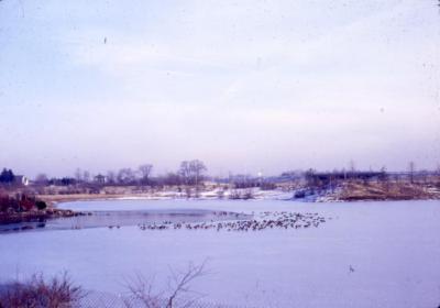Arbor Lake looking toward I-88 area