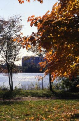 Arbor Lake partially obscured by trees with fall color