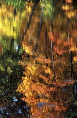 Tree reflections on Arbor Lake