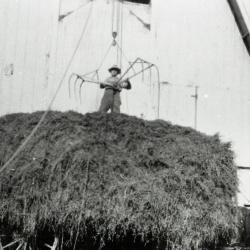 Fritz Kuttner unloading hay at Lisle Farms