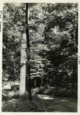 Arboretum road winding through wooded area in summer