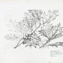 The Destructible Oak