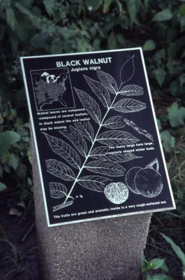 Juglans nigra (black walnut), interpretation sign