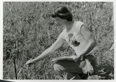 Pat Armstrong studying plant in Schulenberg Prairie
