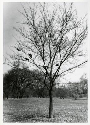 Elm propagation, bags on tree