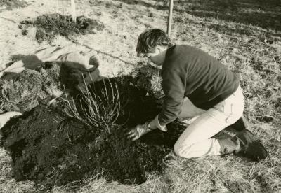 Doris Taylor planting outdoors