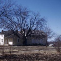 Acer negundo (boxelder), near residence