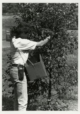 Doris Taylor in Birch Collection hanging soap to deter deer