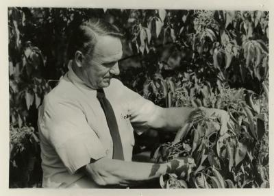 Tony Tyznik studying plant outside