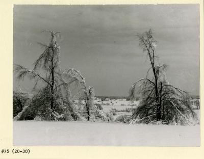 Ice storm in Arboretum