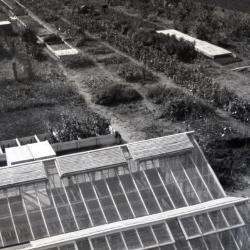The Morton Arboretum's first greenhouse at South Farm (built Spring 1922), aerial view over greenhouse and nursery rows