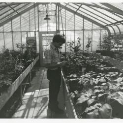 Kris Bachtell in greenhouse looking down at plant