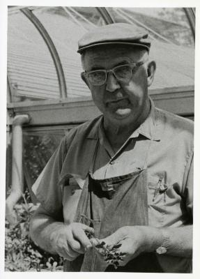Closeup of Roy Nordine holding plant in greenhouse