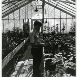 Kris Bachtell working in greenhouse