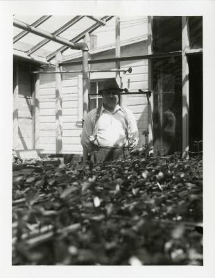 John Van Gemert in greenhouse