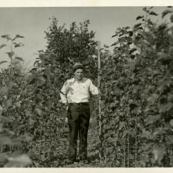 Walter Eickhorst measuring poplar plot