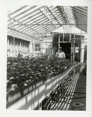 John Van Gemert standing behind plant beds in greenhouse