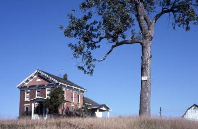 Populus deltoides (eastern cottonwood), near house and barn