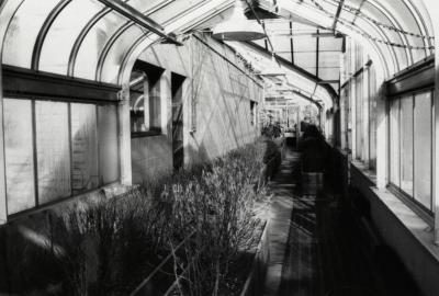 Propagation House, plants being forced for Chicago Flower Show