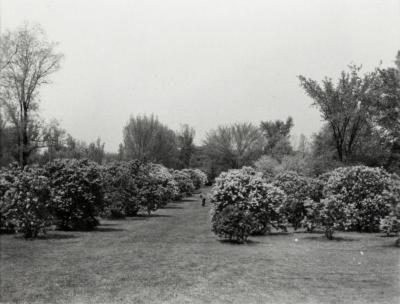 Man taking photograph on tripod in between row of trees