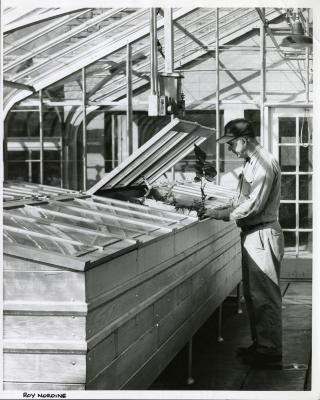 Roy Nordine working in greenhouse