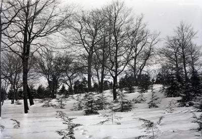 Hemlock Hill in winter
