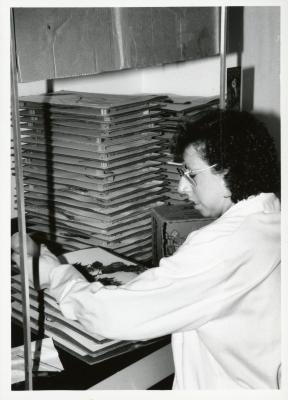 Kim Allen drying a plant specimen in the Herbarium