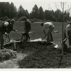 Arbor Day, group planting tree in the Northern Illinois Collection