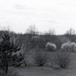 Trees in bloom in open area, looking over Chinese Group
