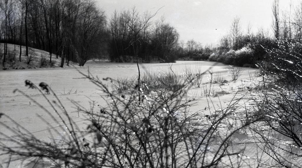 Old Caprifoliaceae Collection in winter with shrubs in foreground