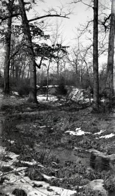 Meandering stream near Pine Hill