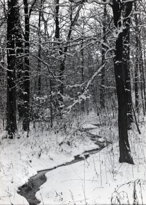 Meandering stream through East side woods in winter