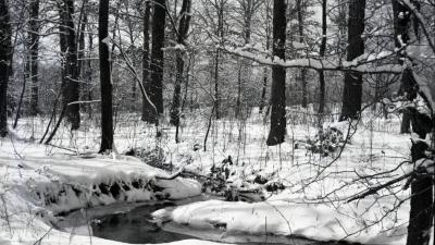 Winter scene, stream winding through snow-covered woods