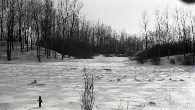 Snow covering open area with Caprifoliaceae Collection in distance
