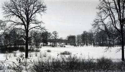 Winter view of Caprifoliaceae Collection in distance looking west