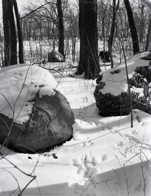 Boulders in east edge of meadow in winter