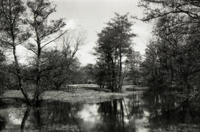 Pond on south side of Japanese Island
