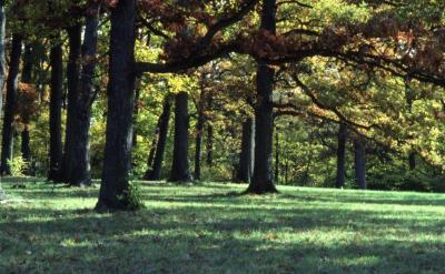 Quercus (oak), fall